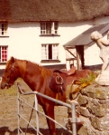 The Brown Stallion (which Christa rode) on the farm where The Eaglekings recorded their album in 1978