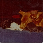 Doggie and her brood briefly on my bed in London before we go on holiday with them