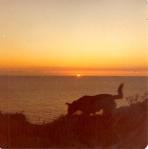 Doggie sunset