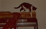 Doggie,  Tiddles and Wurlitzer Electric Piano